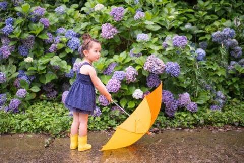 あじさい 女の子 傘 梅雨