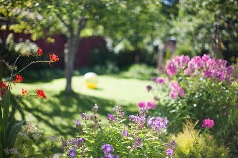 夏 ガーデニング 庭