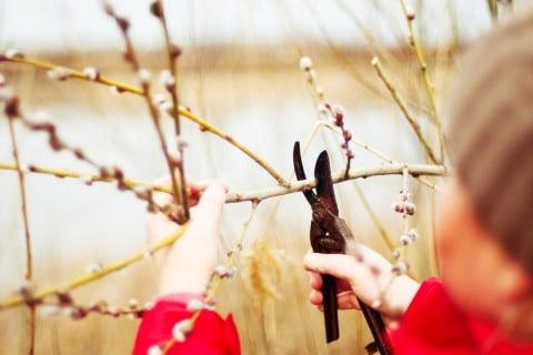 グレープ 挿し木 剪定 ハサミ 庭木 子供
