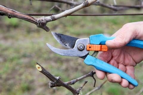 剪定 ハサミ 庭木