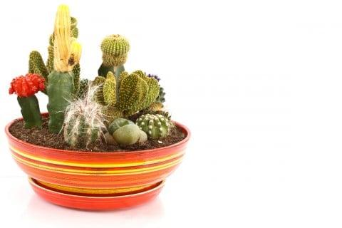 サボテン 寄せ植え 鉢