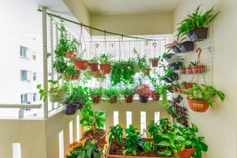 ハンギングプランター 観葉植物3