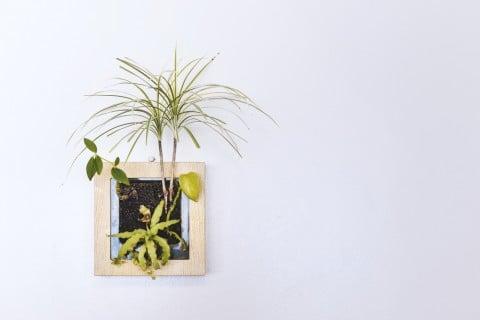 ハンギング プランター 観葉植物1