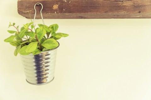 ハンギング 観葉植物2
