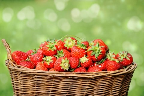 イチゴ 苺 カゴ 収穫