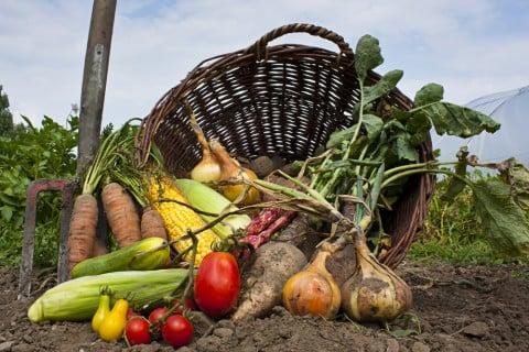 有機栽培 有機農業