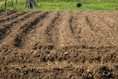 有機栽培 有機農業 畑 土
