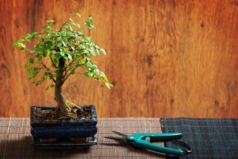ミニ盆栽 作り方