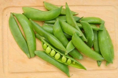 エンドウ豆 エンドウマメ