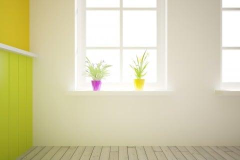 観葉植物 窓際 日向 日光