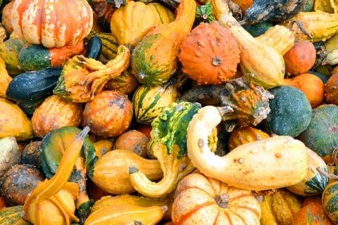 かぼちゃ 種類