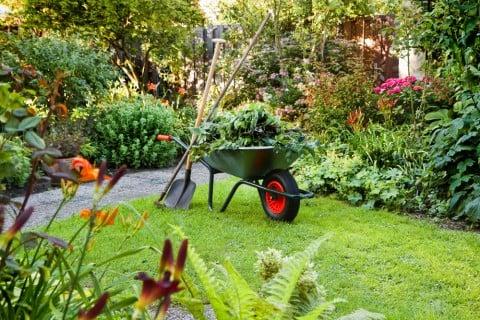 夏 庭 家庭菜園 ガーデニング