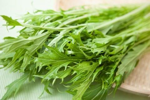 家庭菜園におすすめ冬野菜 水菜 ミズナ