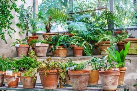 観葉植物 鉢植え