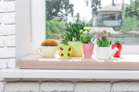 多肉植物 窓際 インテリア