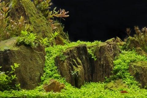 水草 水槽 アクアリウム