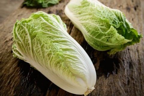 家庭菜園におすすめ冬野菜 白菜 ハクサイ