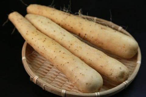 ナガイモ 山芋 ヤマイモ 長芋