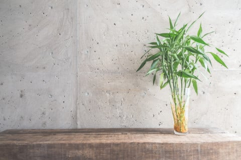 インテリア 観葉植物 室内 リビング ミリオンバンブー