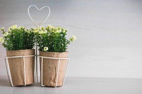 壁掛け 植木鉢