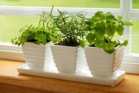 観葉植物 ハーブ 窓辺