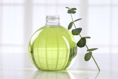 ユーカリ 観葉植物6