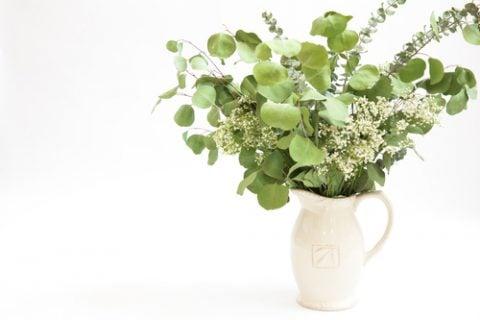 ユーカリ 観葉植物16