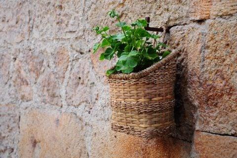 籐カゴ 植物 ハンギング