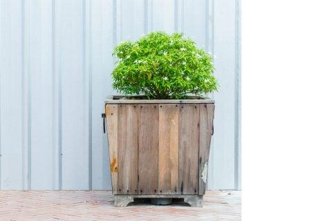 木製鉢 観葉植物