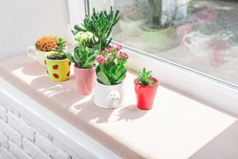 多肉植物 窓辺 植木鉢