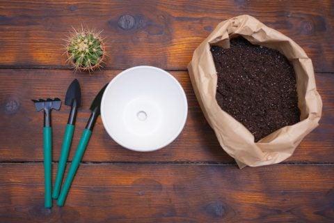 サボテン 土 鉢