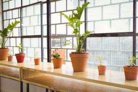 窓ぎわ 観葉植物