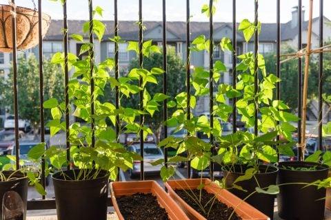 観葉植物 ベランダ1