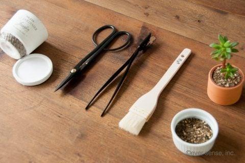 オリジナル グッズ 多肉植物 セダム 挿し木 ハサミ 植木鉢 (10)
