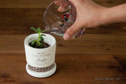 オリジナル グッズ 多肉植物 セダム 挿し木 ハサミ 植木鉢 (22)