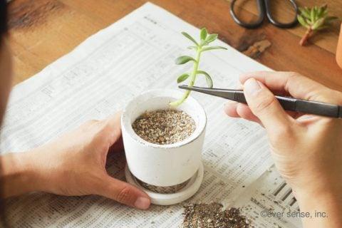 オリジナル セダム 挿し木 苗植え ピンセット