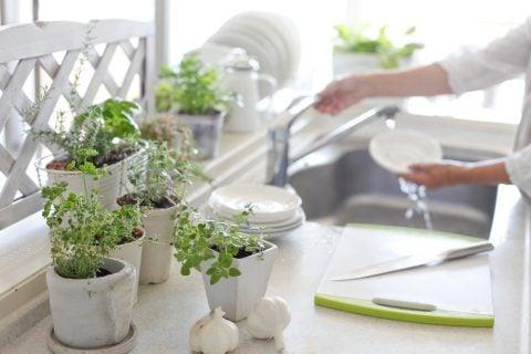 キッチン ハーブ 観葉植物10