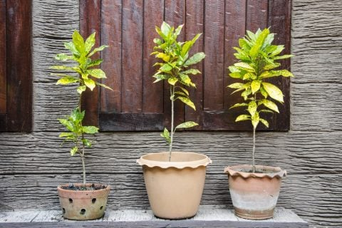 テラコッタ鉢 観葉植物