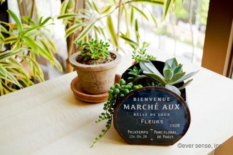 オリジナル グリーンネックレス セダム エケベリア 多肉植物 寄せ植え (1)