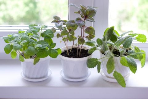 観葉植物5