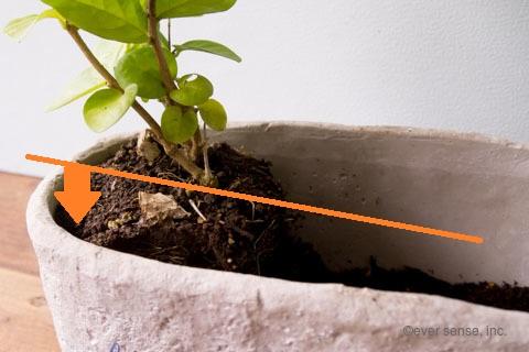 オリジナル アイビー 寄せ植え ジャスミン ウォータースペース