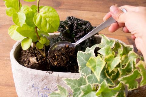 オリジナル アイビー 寄せ植え 土