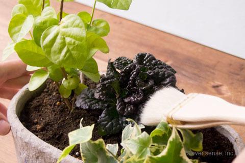 オリジナル アイビー 寄せ植え ブラシ