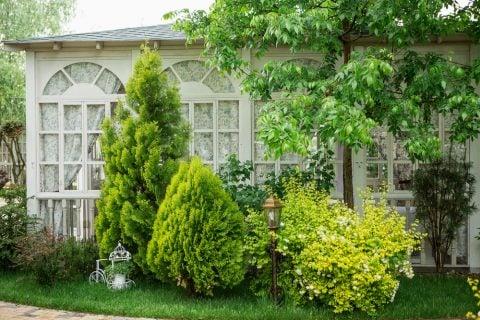 庭木 ガーデニング 常緑樹 日陰
