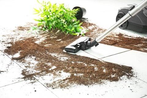 掃除 観葉植物 植え替え 失敗