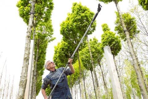 剪定 庭木 高枝切りバサミ2