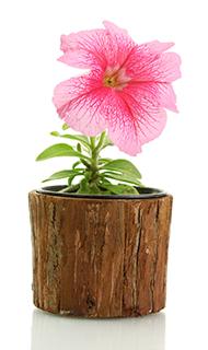 ペチュニア 植木鉢カバー