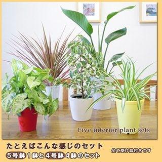 要出典 観葉植物おまかせ5鉢セット!
