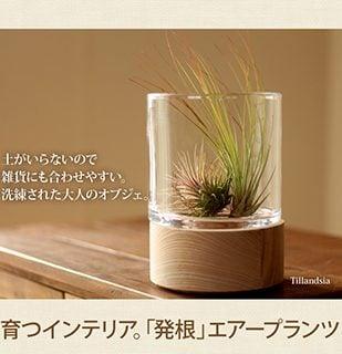 要出典-エアープランツ「育てやすい、発根コレクション」-【育て方説明書付きの観葉植物-インテリアにもあう、ミニ観葉植物】-