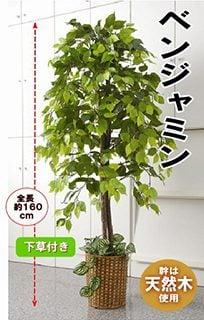 要出典-人工観葉植物-ベンジャミン   1.5m 大型-インテリア-造花-フェイク-グリーン-